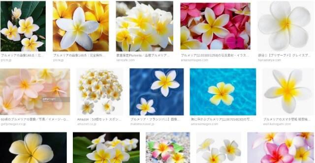 プルメリアの花|Google画像検索より引用