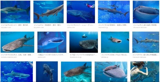 ジンベイザメ|Google画像検索より引用