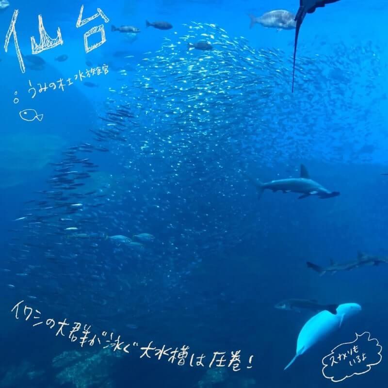 仙台うみの杜水族館|フォトレコ|Procreate